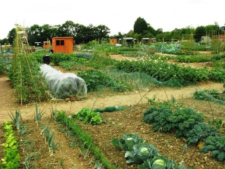 The Earls Colne Allotment site