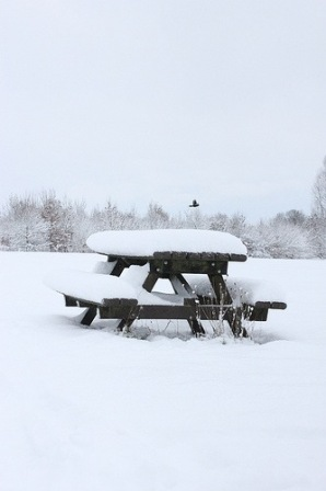 Snowy picnic table with bird