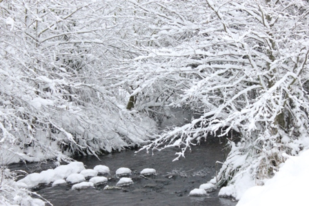Frosted River Scene